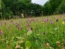 Intensivierung des Grünlands führt zum Artenschwund