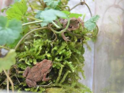 leben auf dem Ökohof - darunter diese jungen Erdkröten
