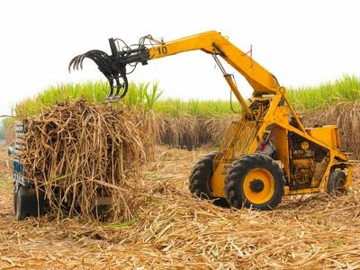 werden häufig natürliche Vegetationen in landwirtschaftlich genutzte Flächen umgewandelt und Wälder abgeholzt. (© Foto: Colourbox)
