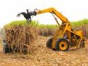 Für den Anbau von Zuckerrohr