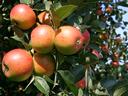 Entwicklung eines Obstbau-Nachhaltigkeitssystems mit Praxispartnern