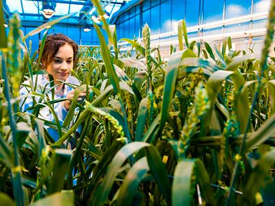 Auf den bundesweiten 4. Platz kommen die Agrarwissenschaften mit einer Fördersumme von 7,3 Millionen Euro