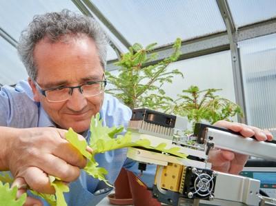 Privatdozent Dr. Jürgen Burkhardt vom Institut für Nutzpflanzenwissenschaften und Ressourcenschutz der Universität Bonn misst Transpiration und Fotosynthese mit einem Gaswechselmessgerät.