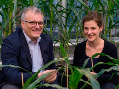 Erforschen die Gene von Maispflanzen: Frank Hochholdinger und Jutta Baldauf vom Institut für Nutzpflanzenwissenschaften und Ressourcenschutz (INRES) der Universität Bonn im Gewächshaus.