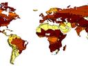 Die Grafik zeigt den prognostizierten Rückgang der Waldflächen in verschiedenen Regionen