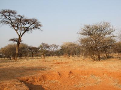 kann es einen Kipppunkt der Desertifikation überschreiten. Dabei gehen ausdauernde Futtergräser dauerhaft verloren, und zurück bleibt nackter, kahler Boden. Dieser ist besonders anfällig für Bodenabtrag (unten im Bild)