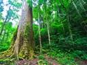 Umweltpolitik hat oft unerwünschte Nebenwirkungen
