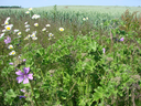 Wildflower strips